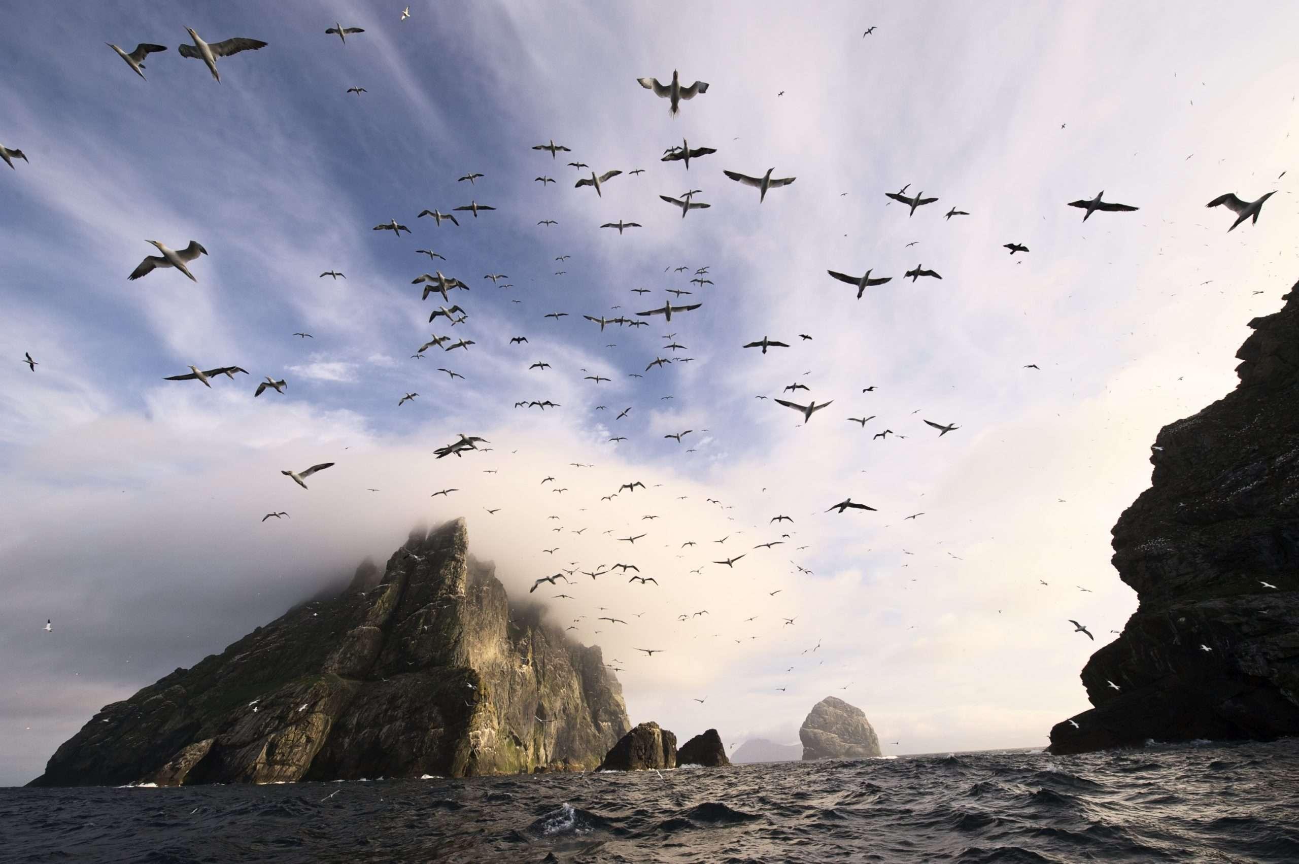 St Kilda by Sea Harris 2